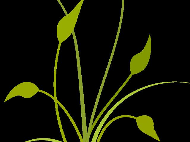 Plant frames illustrations hd. Net clipart transparent background