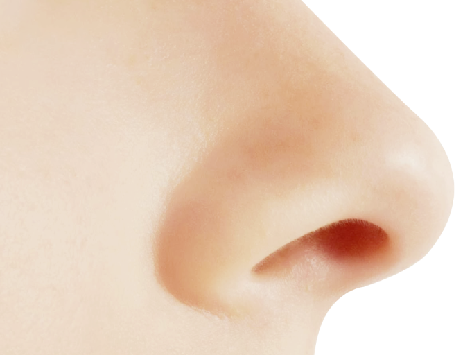 Png images free download. Nose clipart many