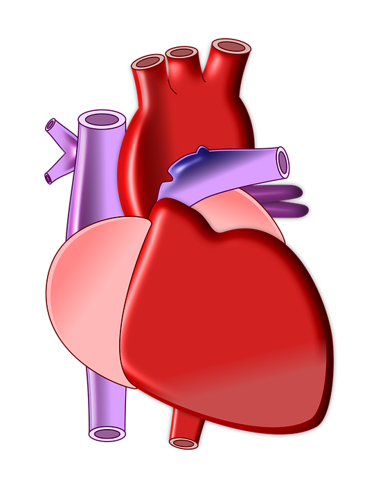 Organs animated free collection. Nose clipart sensory organ