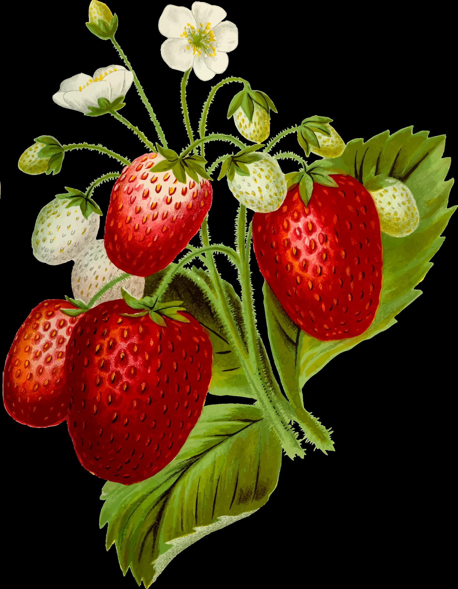 Strawberries clipart fun fruit. Big image png
