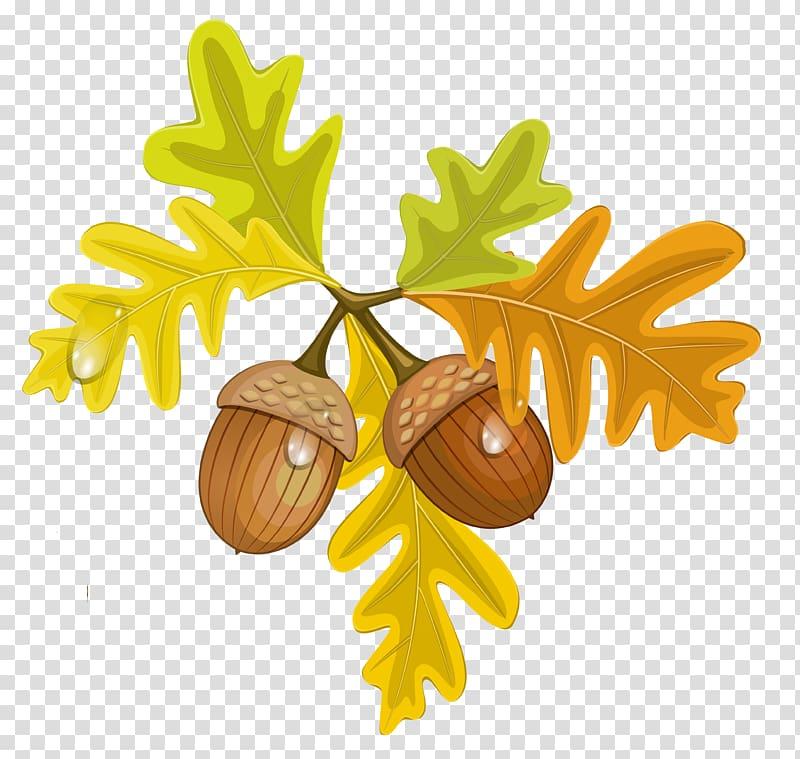 Nut clipart autumn acorn. Transparent background png