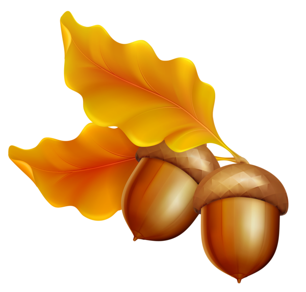 Nut clipart autumn acorn. Gallery fall png