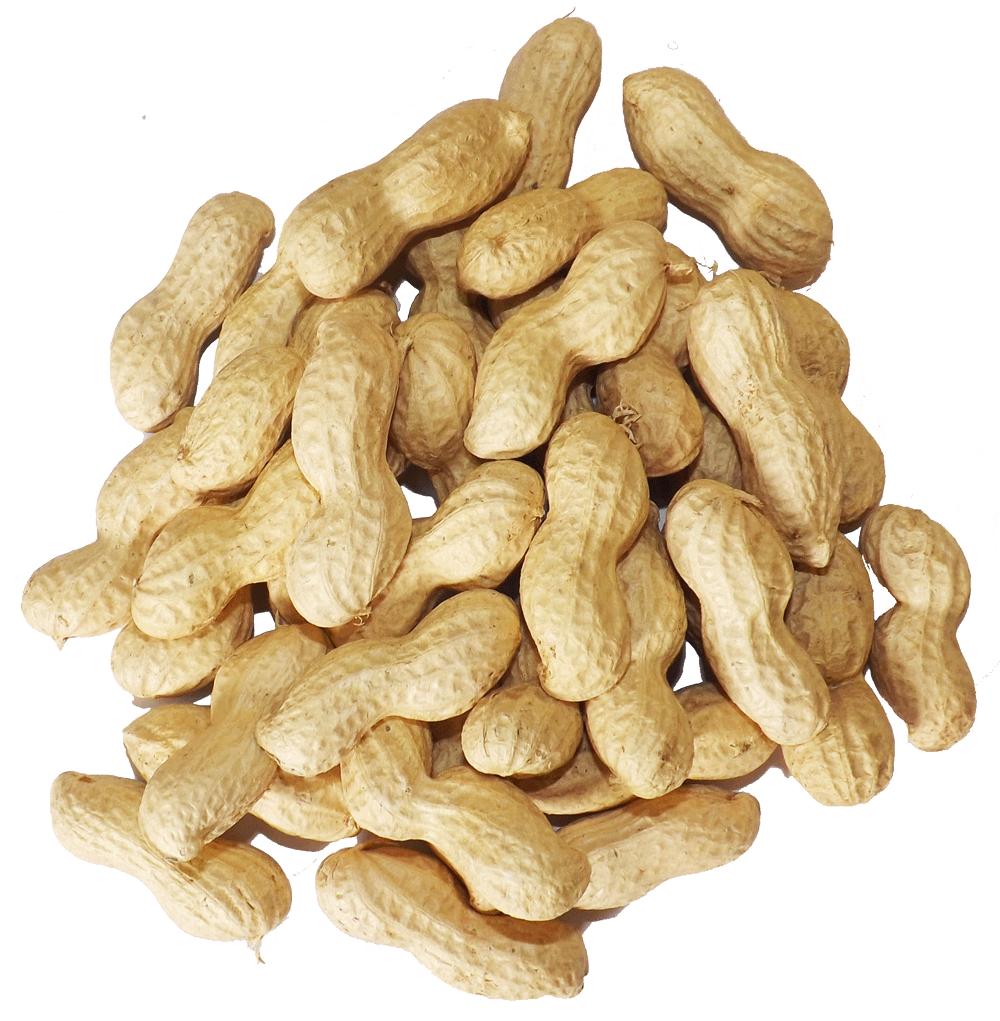 Nut clipart bag peanut. Squirrels everywhere pound peanuts