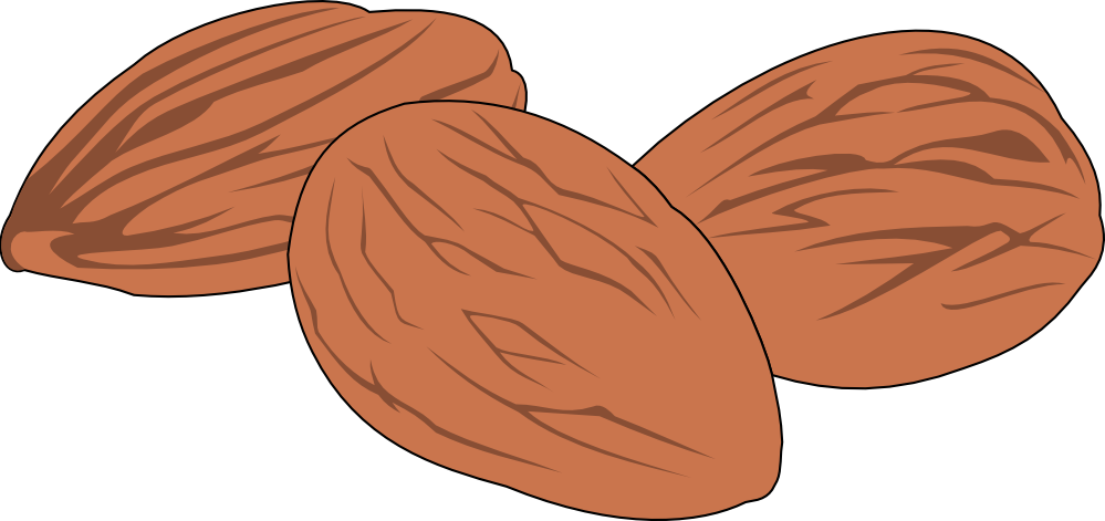 collection of nuts. Nut clipart cartoon