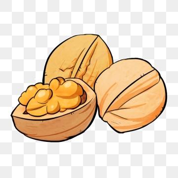 Walnut png vector psd. Nut clipart cartoon