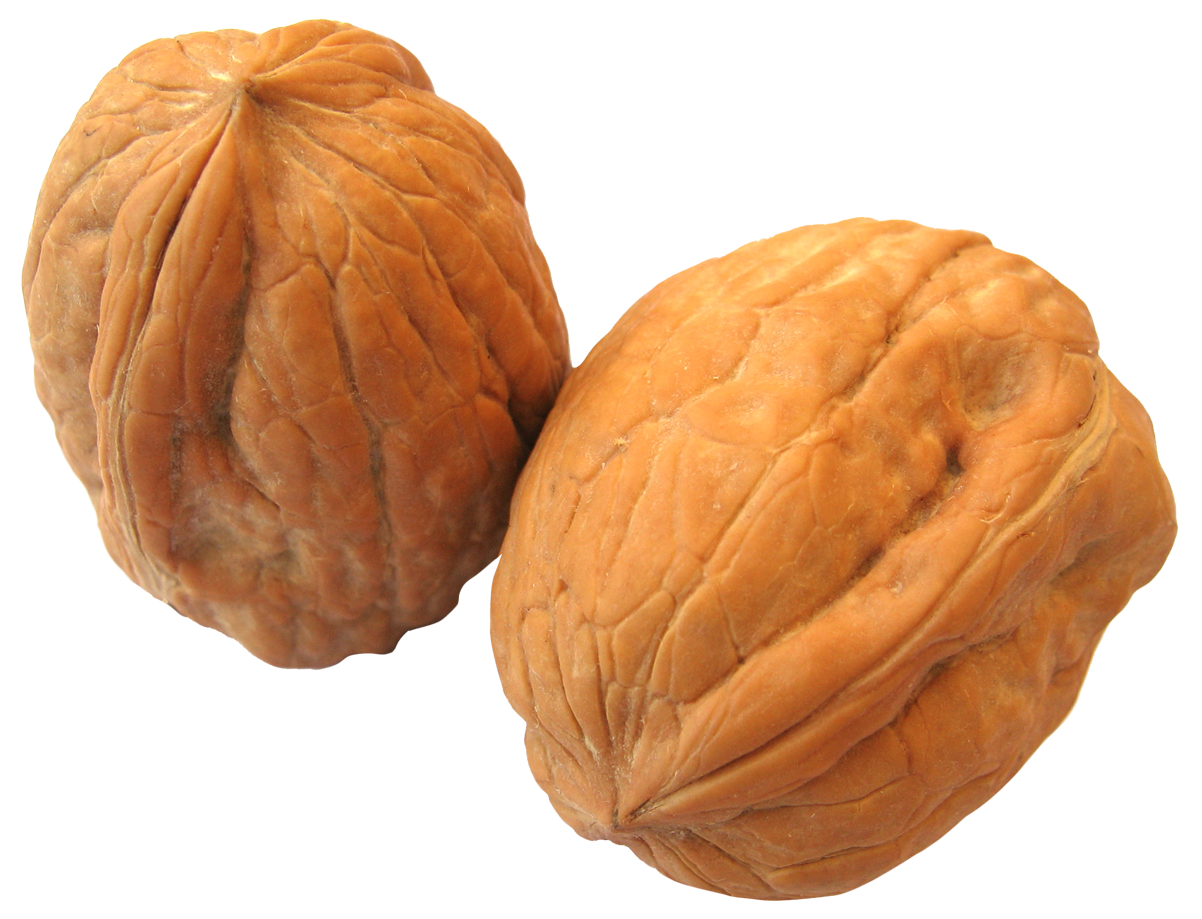 Walnut png image pngpix. Nut clipart cashew nut