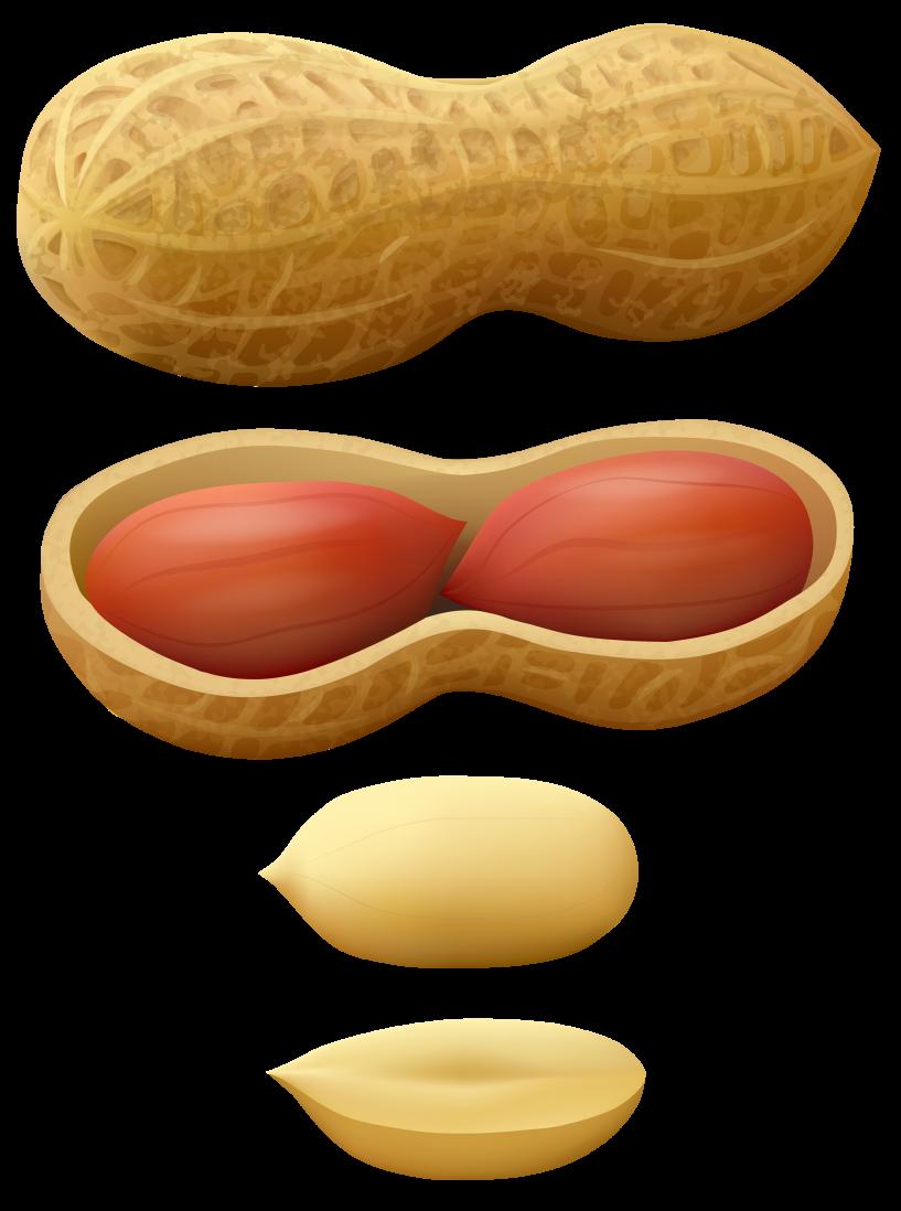 peanuts clipart nut