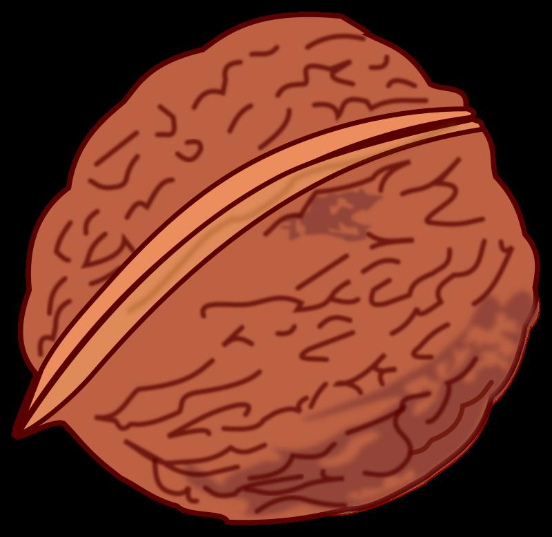 Walnut colored medium image. Nut clipart clip art