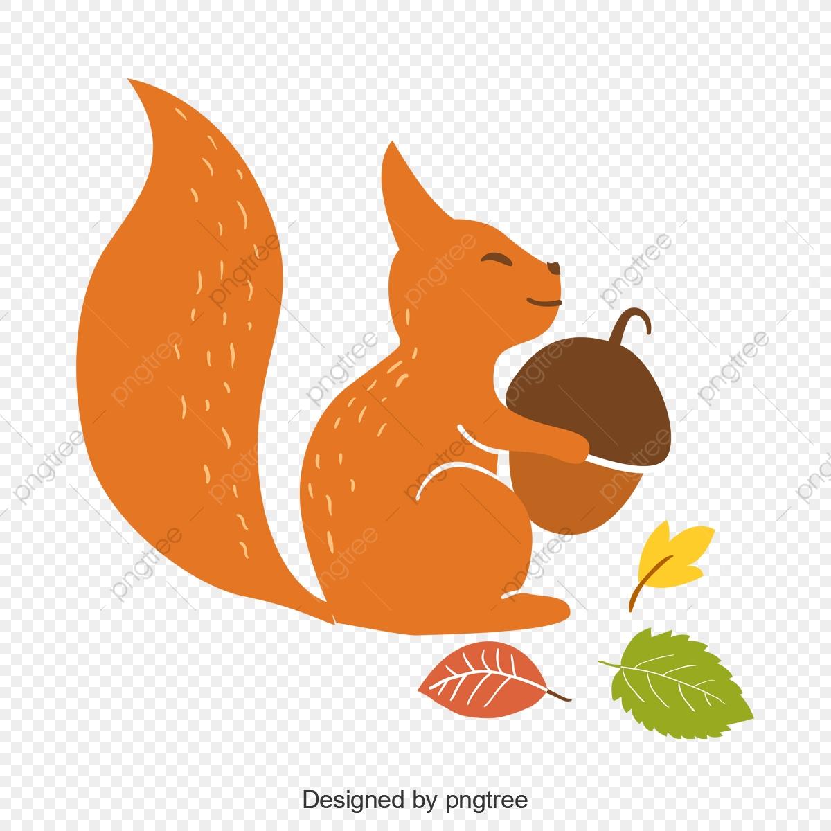 Graphics squirrel leaf pine. Nut clipart cute