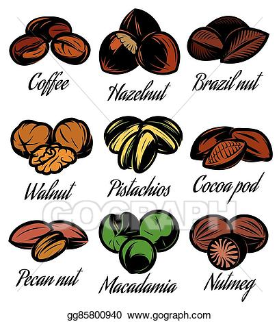 Clip art vector set. Nut clipart different seed