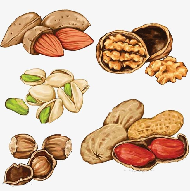Nuts clipart different seed. Nut hand painted food
