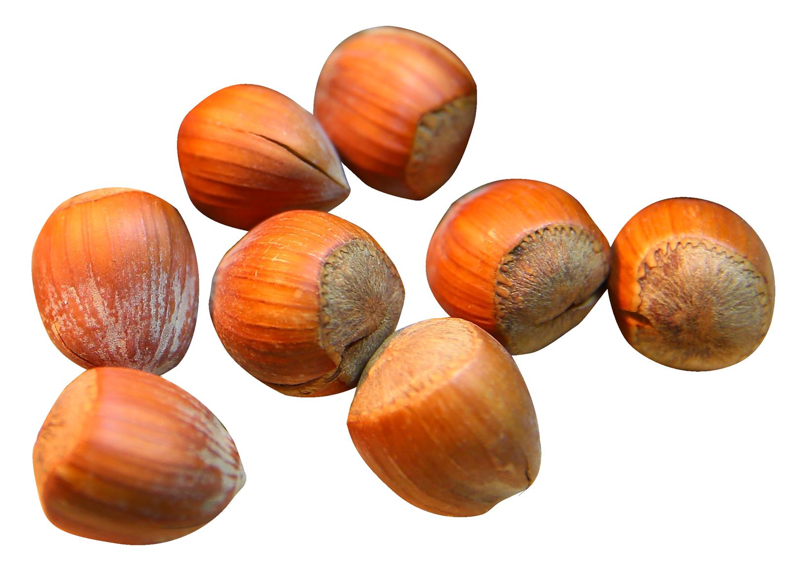 Nut clipart hazelnut. Png image purepng free