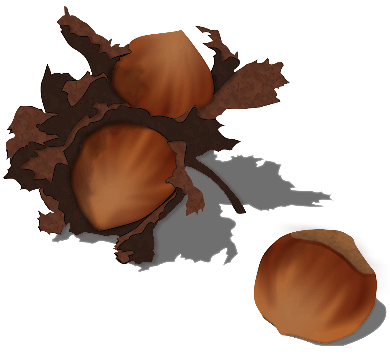 File png wikimedia commons. Nut clipart hazelnut