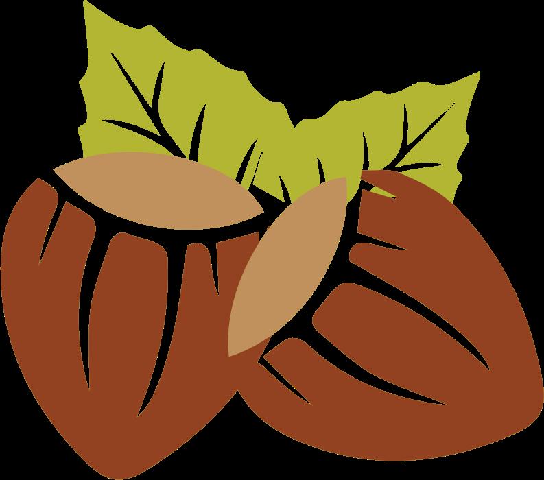 Nut clipart hazelnut. Hazelnuts medium image png