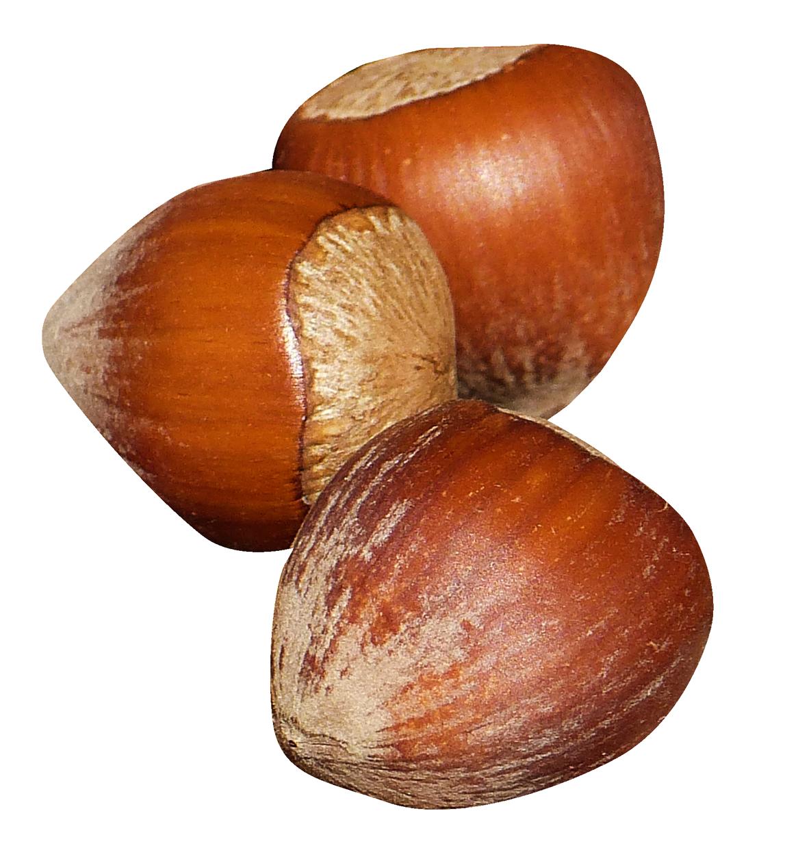 Nut clipart hazelnut. Png image pngpix