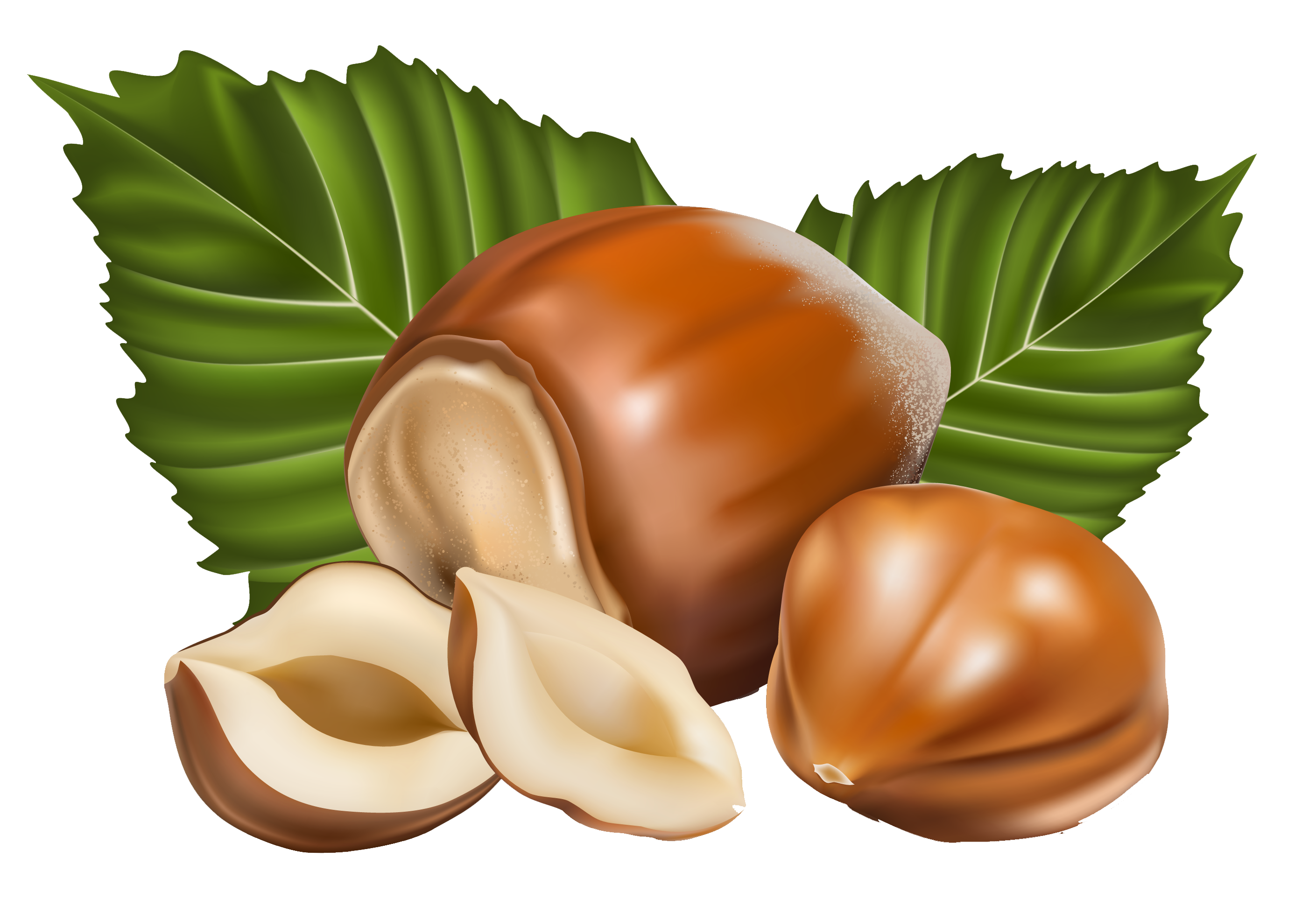 Nut clipart hazelnut. Png picture gallery yopriceville