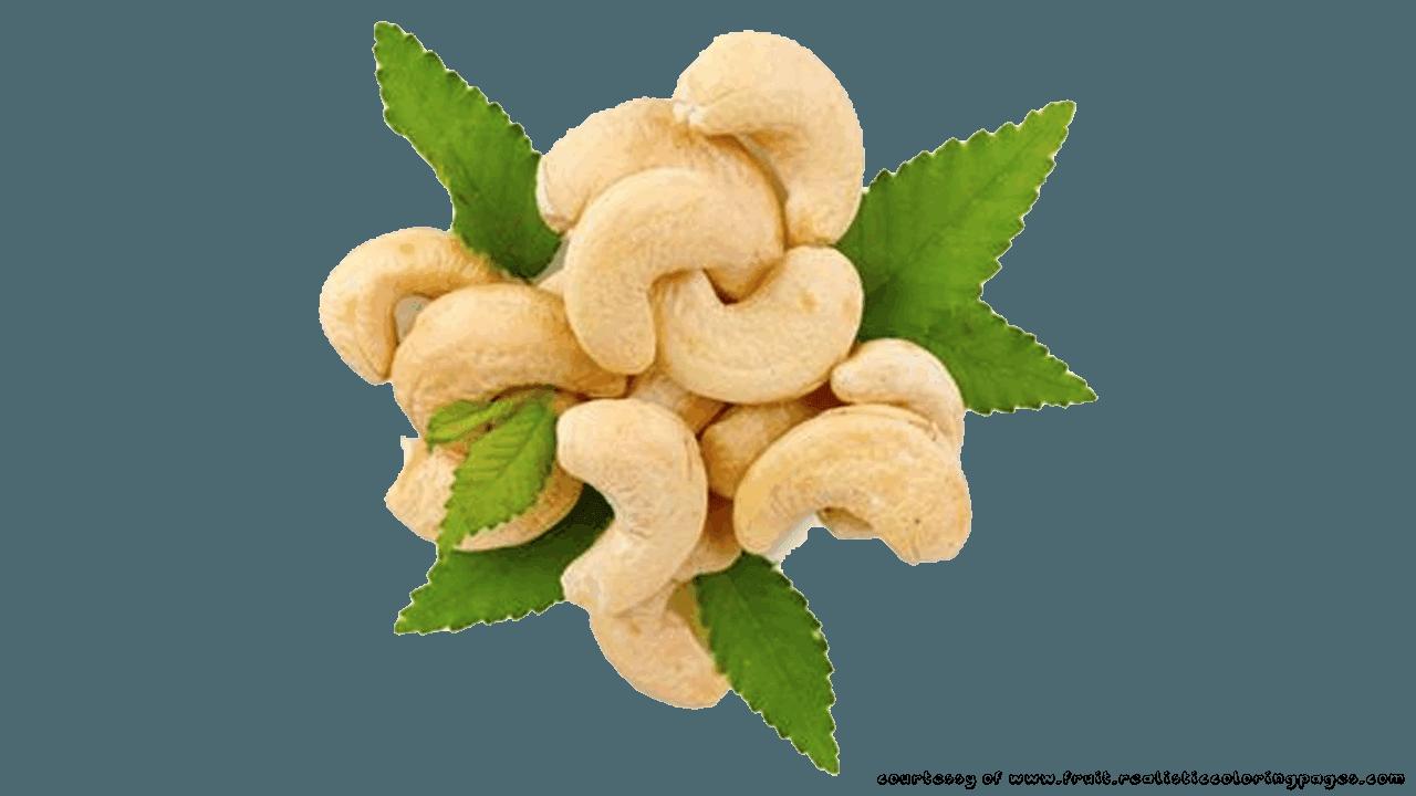 Rambutan cashew fruit pencil. Nut clipart kasuy