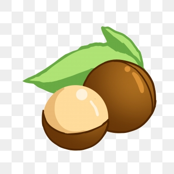 Nuts png vector psd. Nut clipart macadamia nut