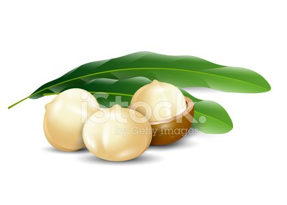 Nuts white background natural. Nut clipart macadamia nut