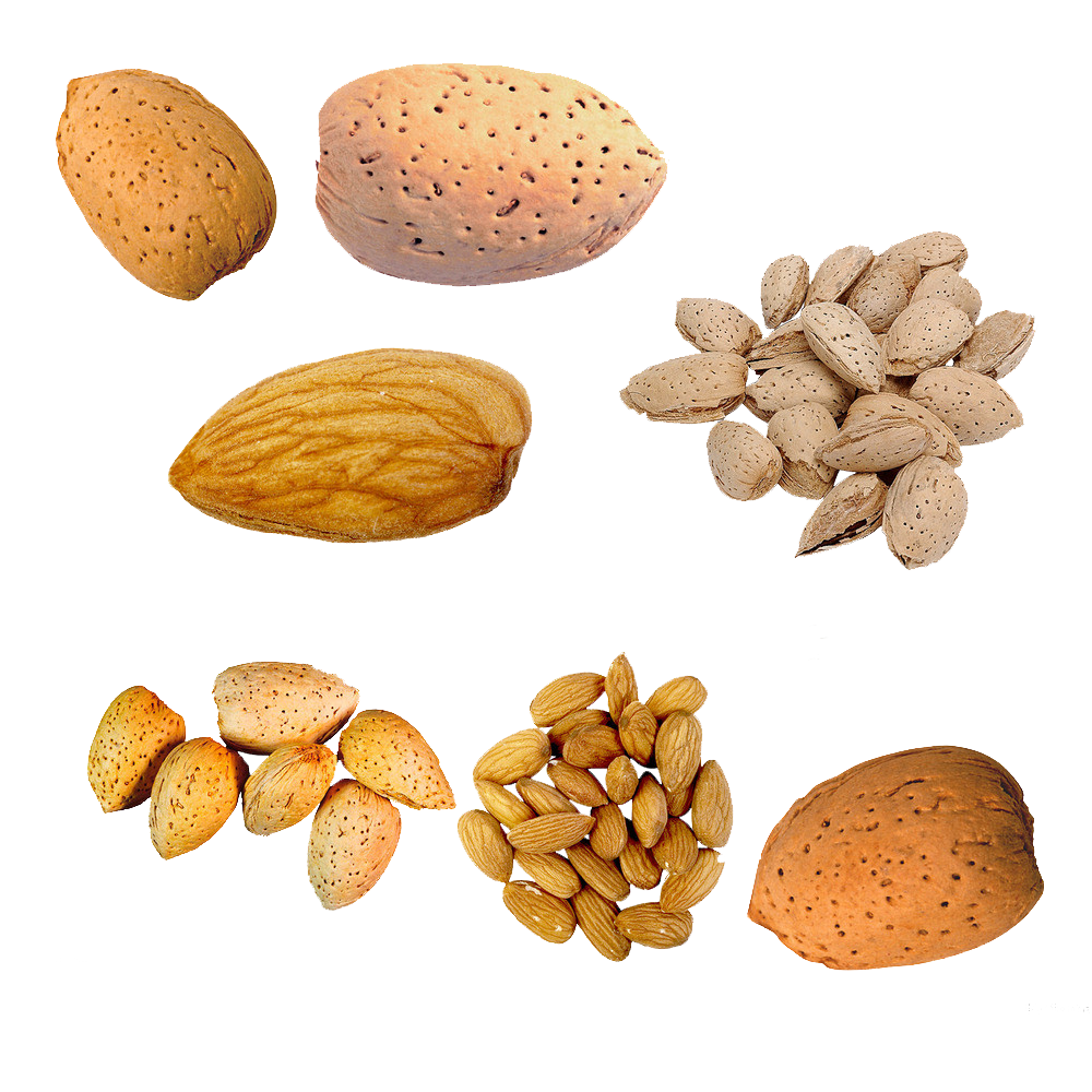 Nut u cu du. Nuts clipart different seed