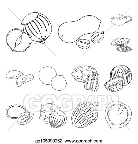 Nuts clipart outline. Stock illustration different kinds