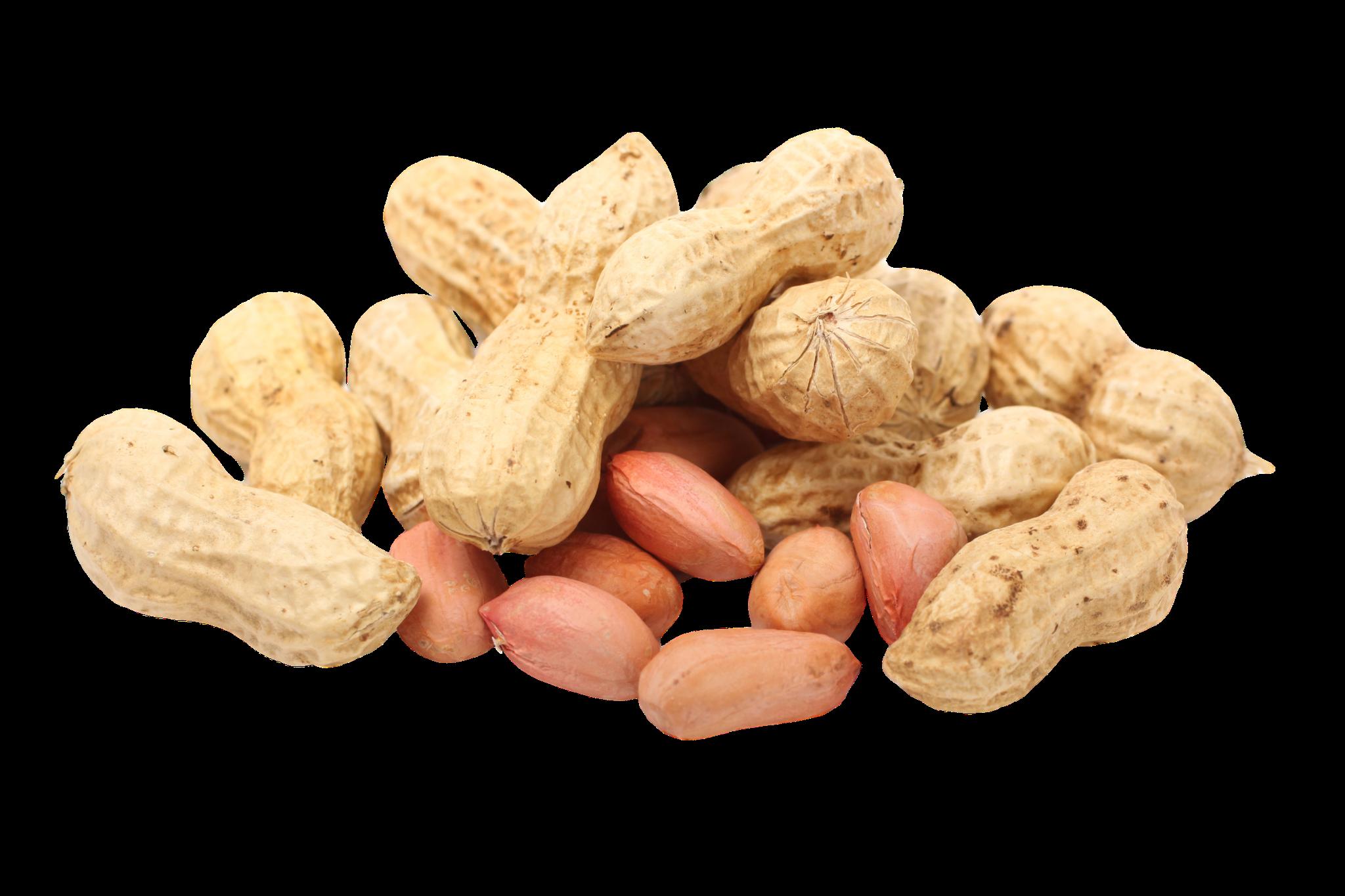 Peanuts clipart nut seed. Arachis hypogaea perfect nuts