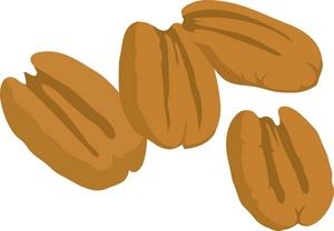 nut clipart pecan nut