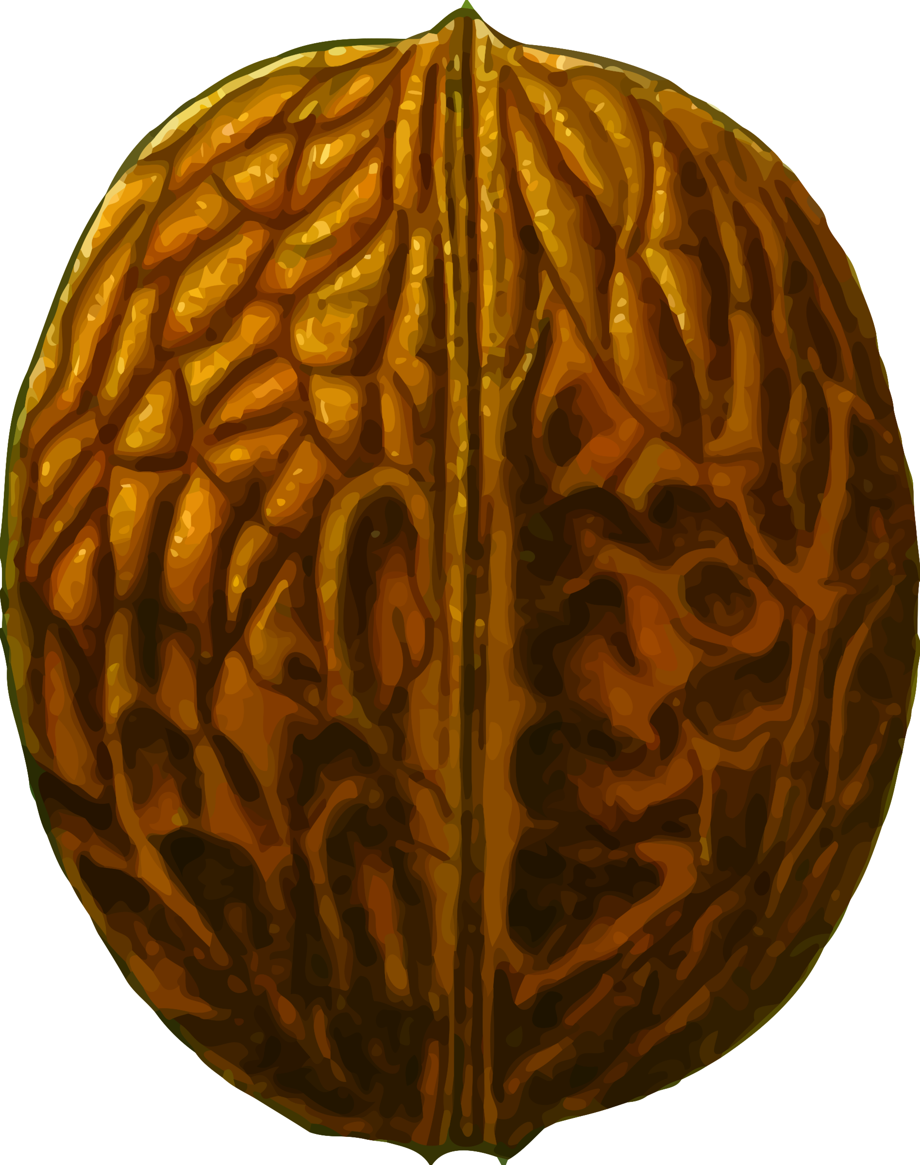 Walnut drawing at getdrawings. Nut clipart pecan nut