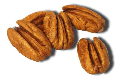 Nut clipart pecan nut. Free cliparts download clip