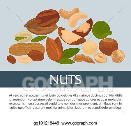 Vector stock nuts organic. Nut clipart raw
