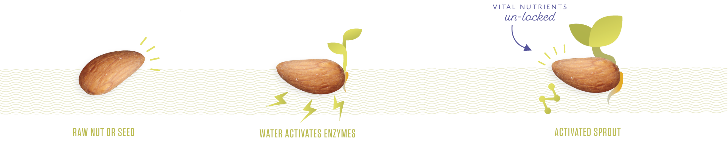 Learn living intentions what. Nut clipart raw