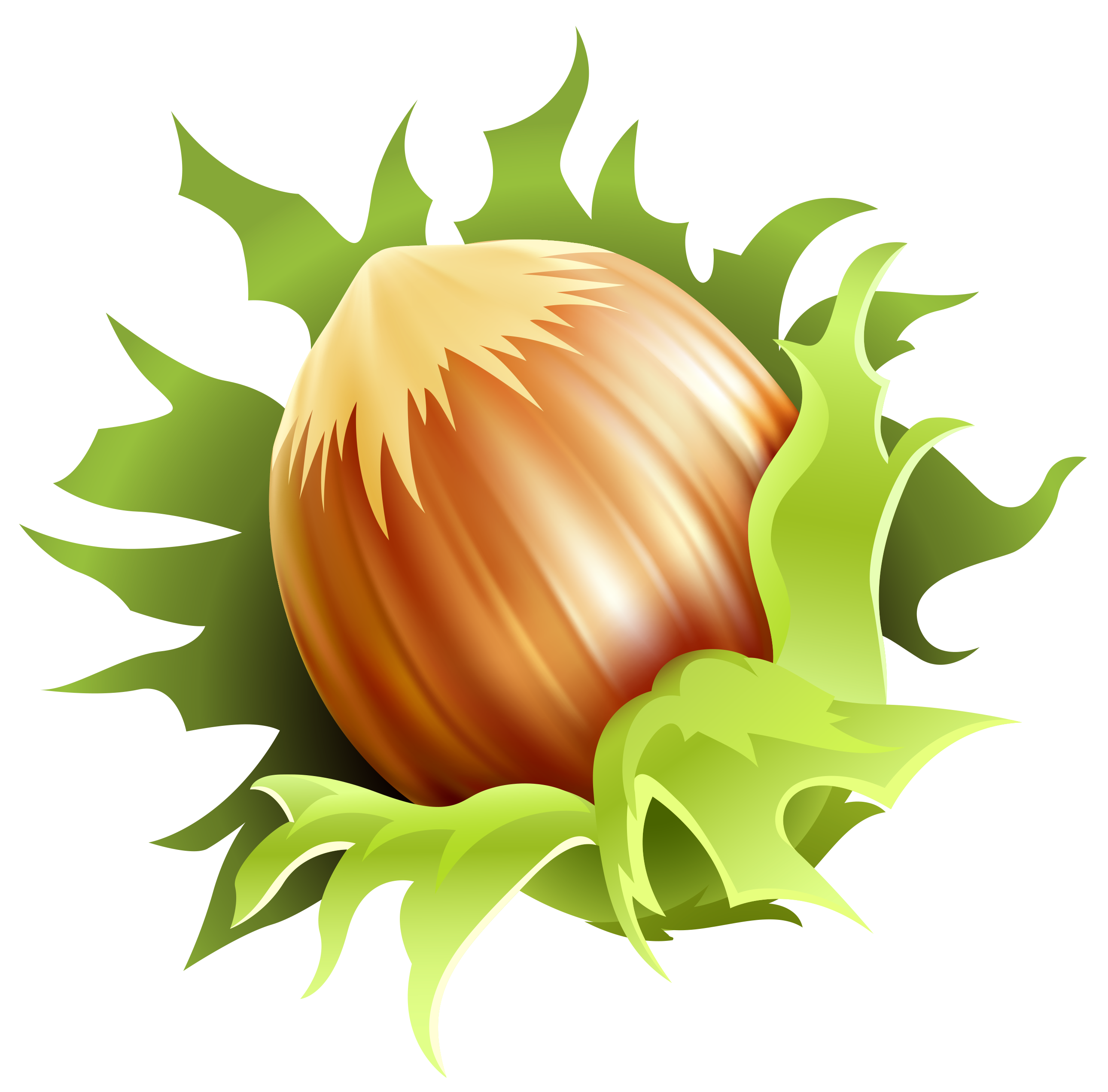Hazelnut group png image. Nuts clipart border