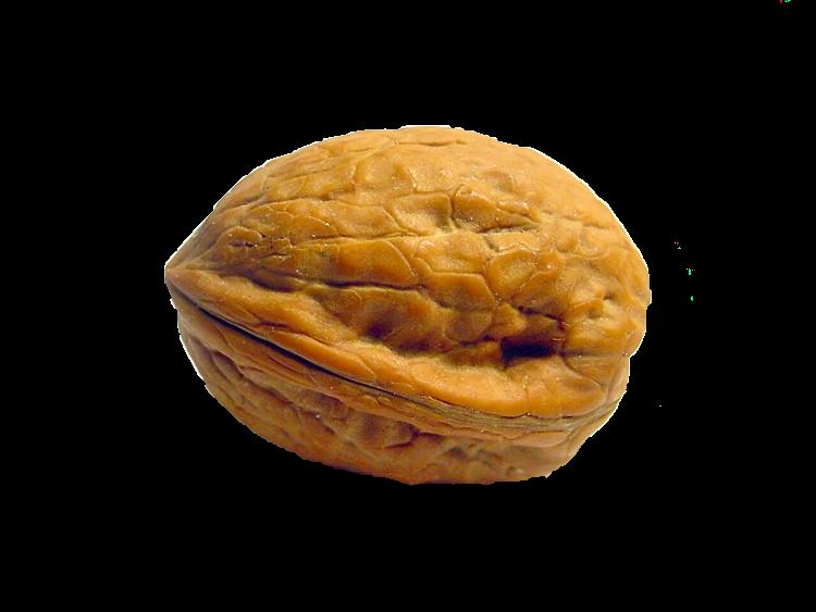 peanuts clipart nutshell