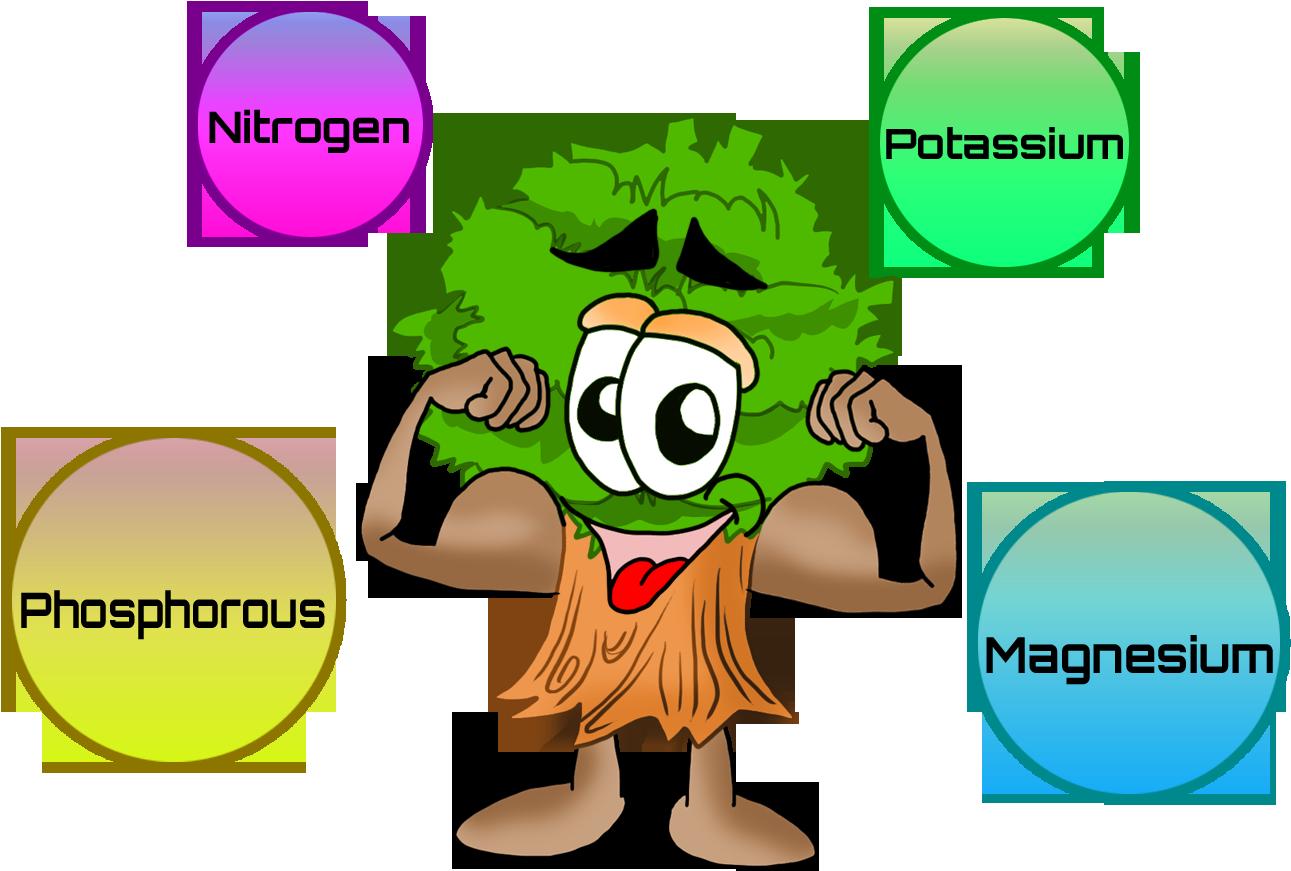 Nutrition dengue awareness