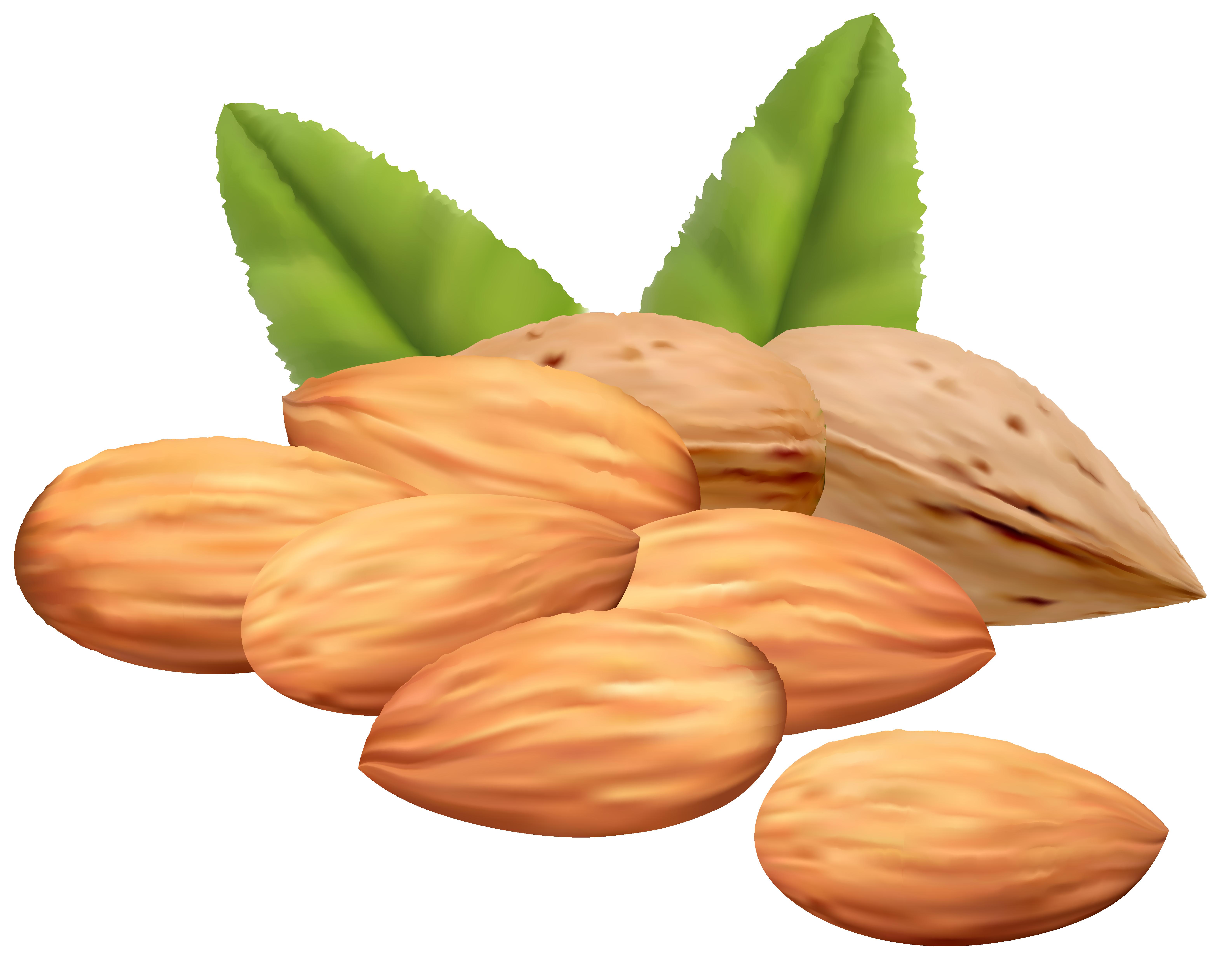 Grains clipart nuts. Free cliparts download clip
