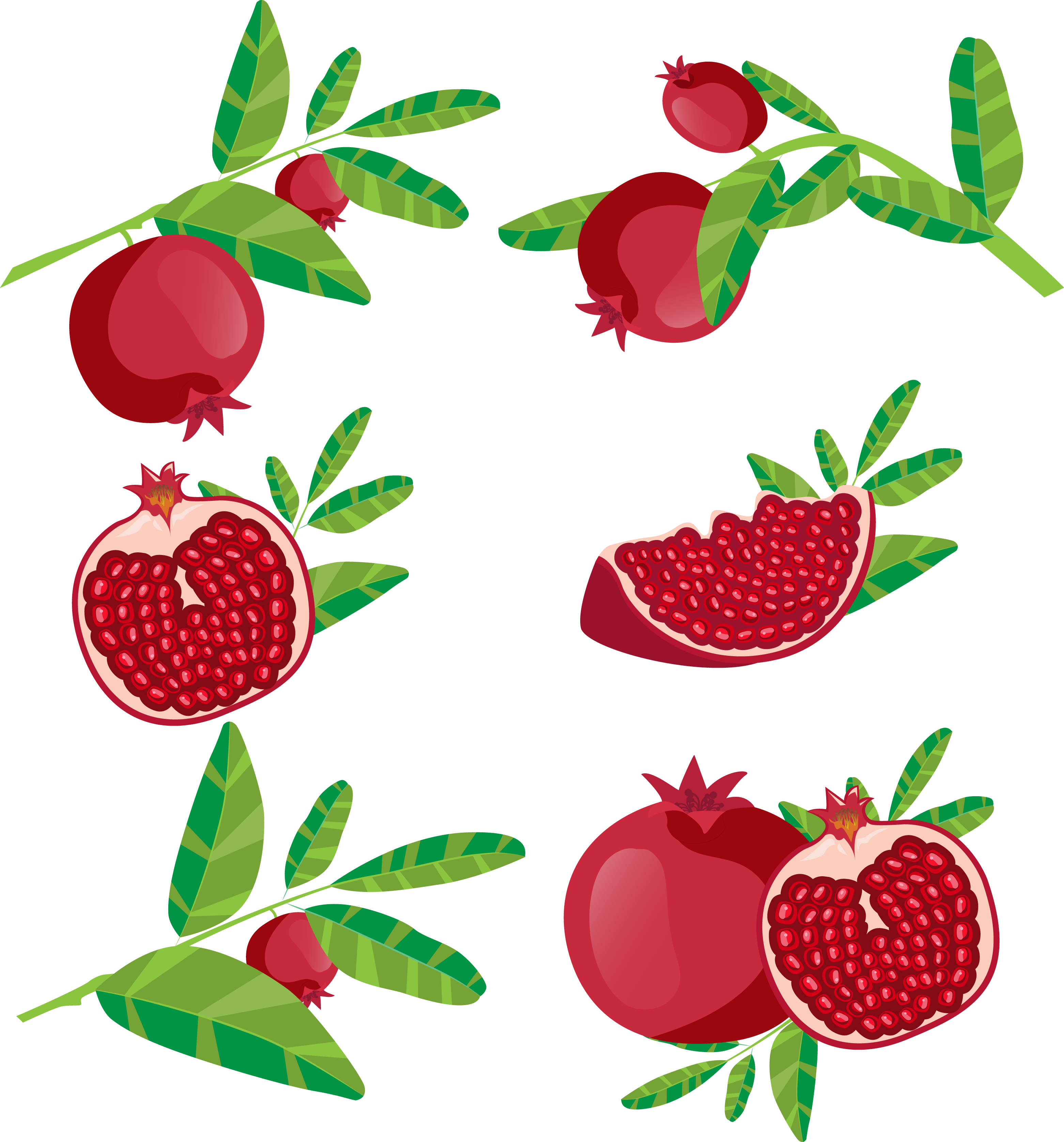 Juice fruit icon red. Pomegranate clipart branch