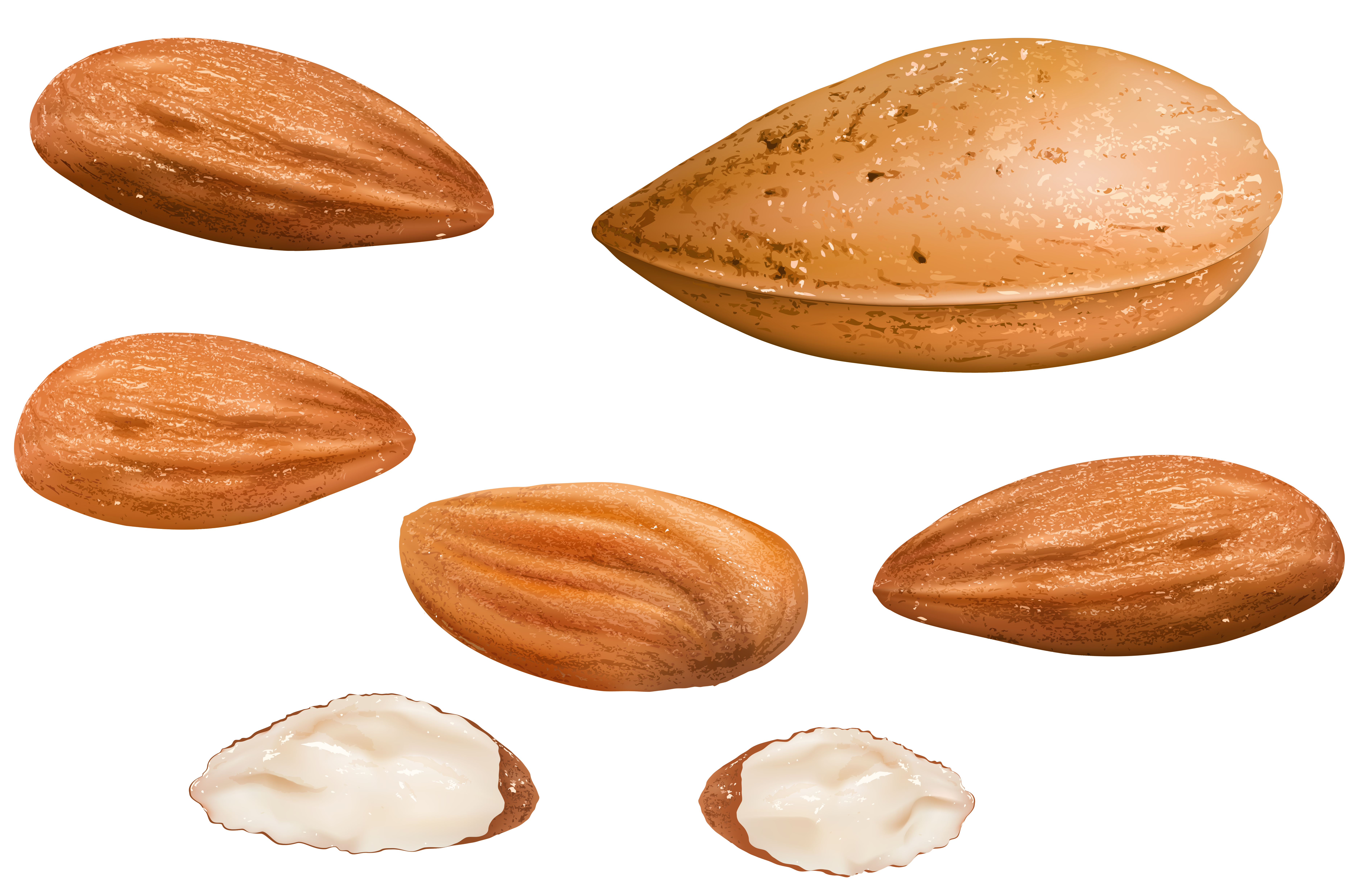 Nuts clipart different seed. Almonds png image gallery