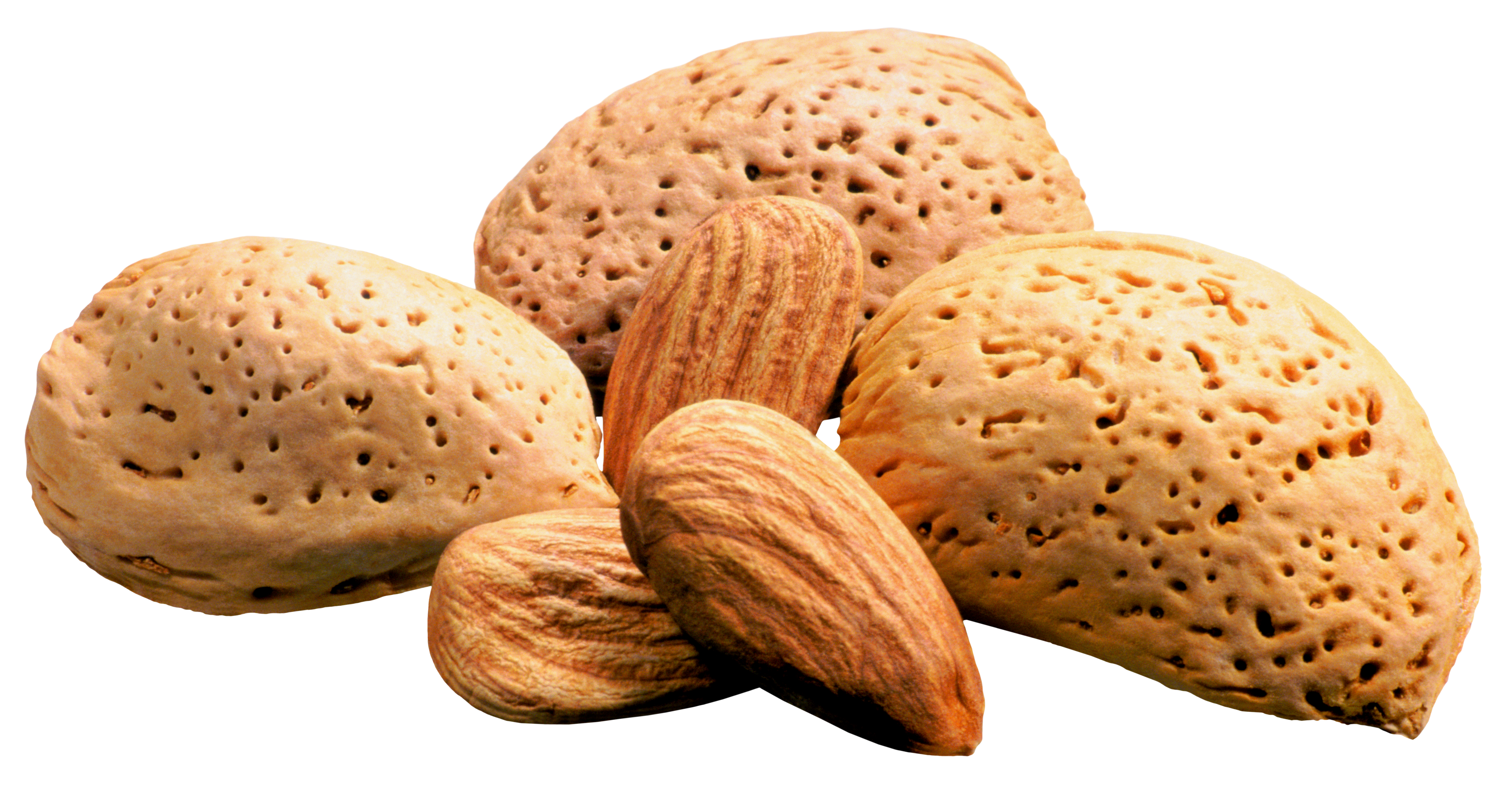 Almonds png picture gallery. Nuts clipart different seed