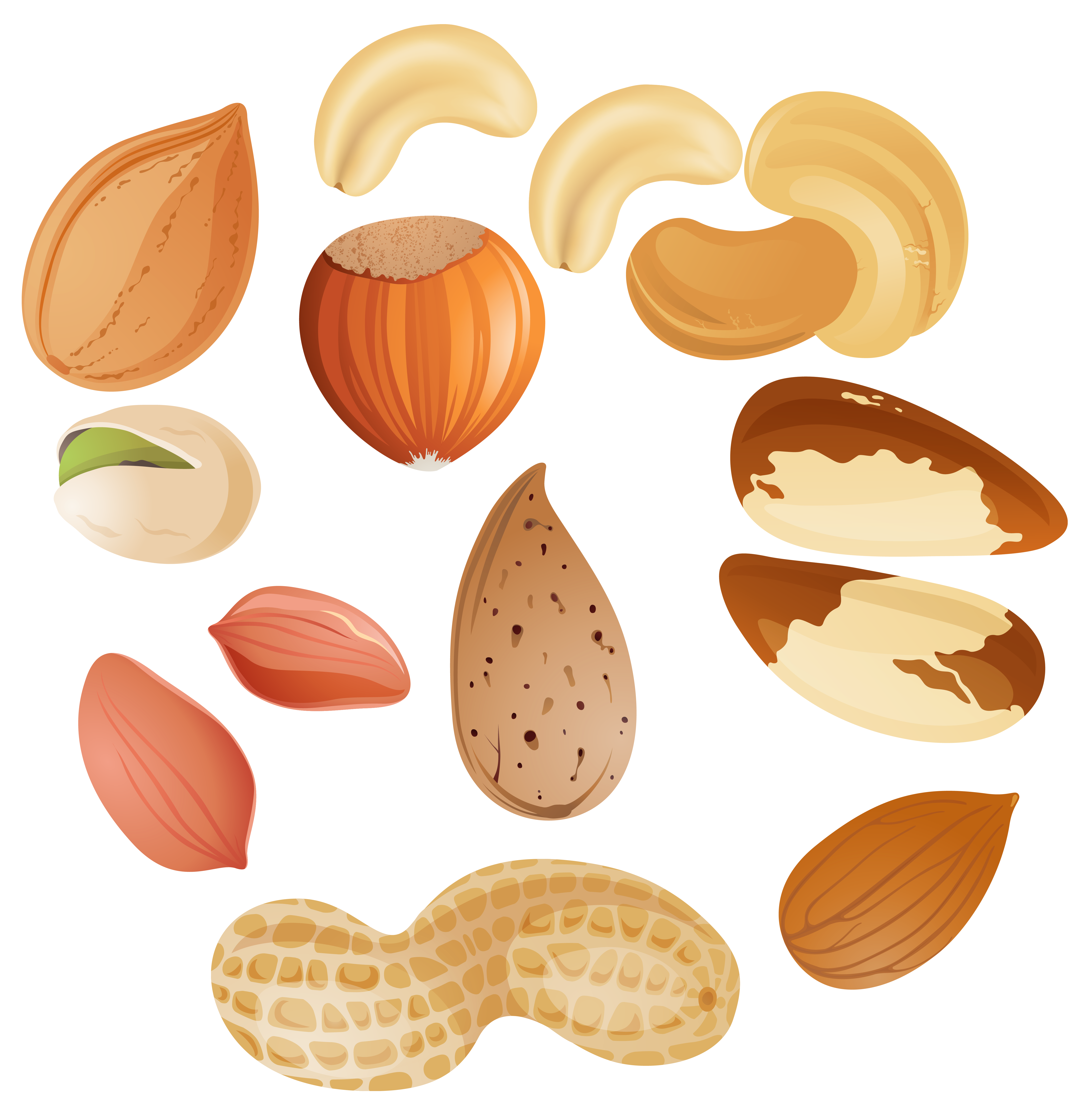 Clipart food nuts. Free cliparts download clip