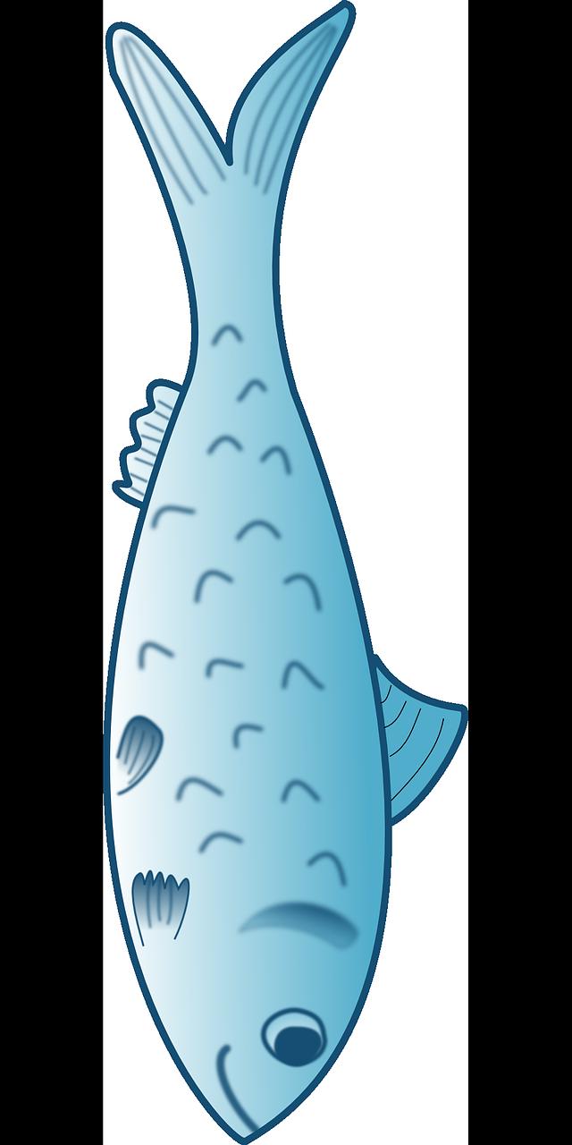 Trout fish animal marine. Ocean clipart nautical