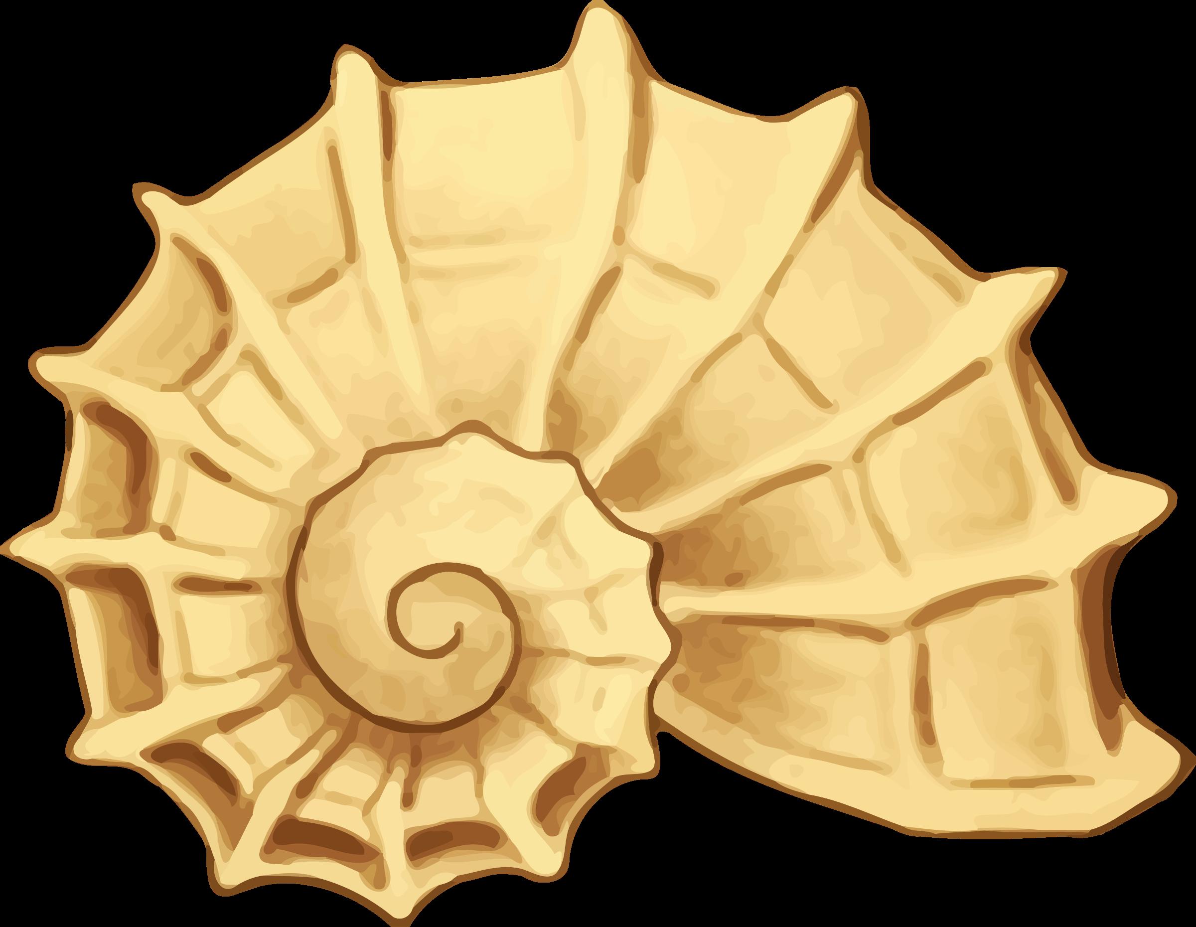 Big image png. Shell clipart sea rock