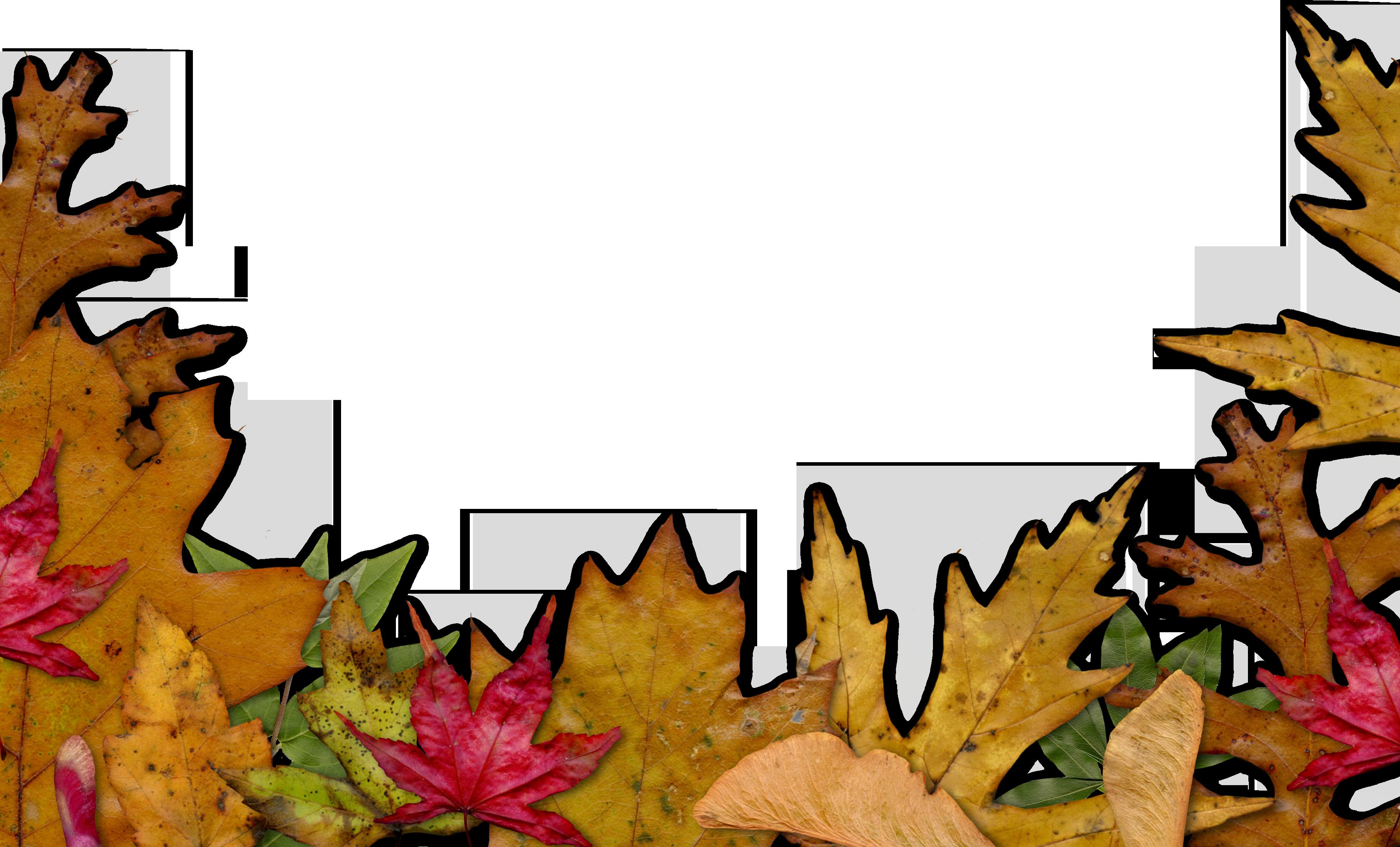 Thanksgiving border png. Autumn leaves clipart corner