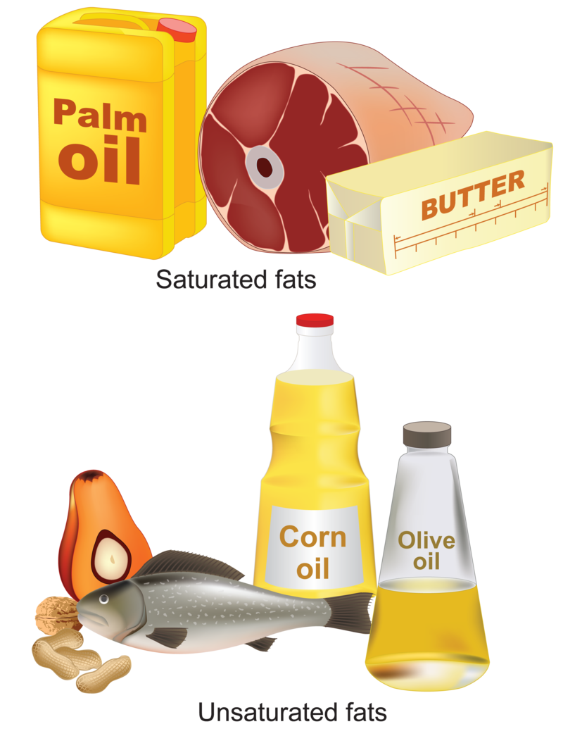 Why do we eat. Oil clipart fats oil
