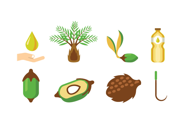 Oil clipart oil extraction. Fruit arecaceae palm illustration