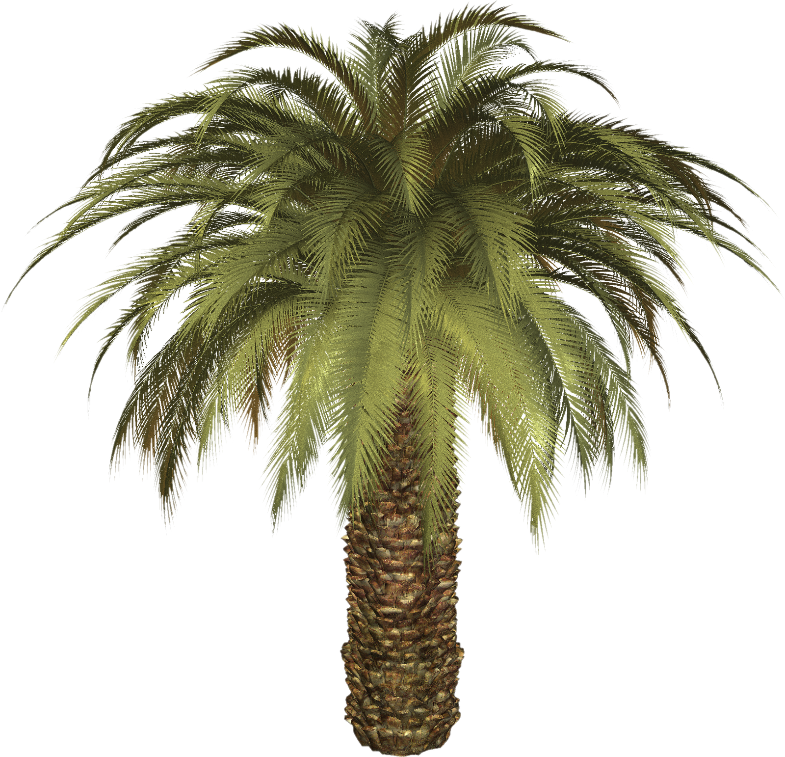 Tree png image purepng. Palm clipart 8 bit