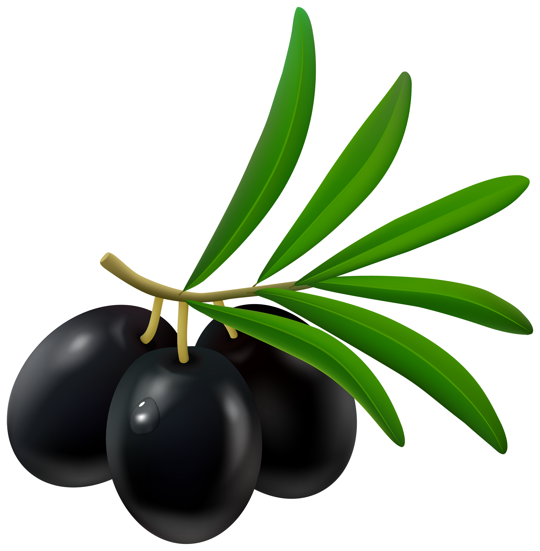 Fruit clipart wreath. Black olive png best