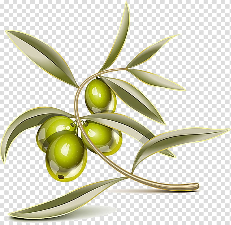 Olive clipart animated. Green fruit leaf branch