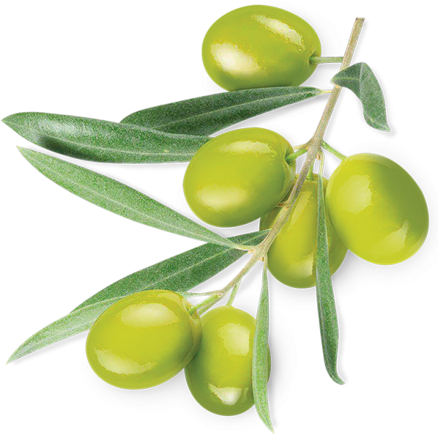 Green plant png and. Olive clipart vector