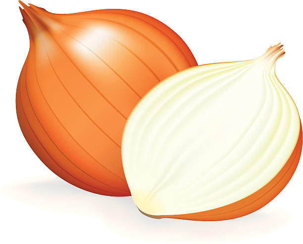 Onion clipart. Backgrounds wallpapers for x