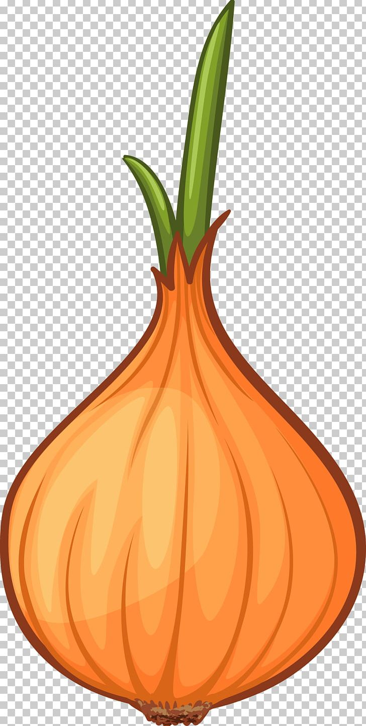 Calabaza cartoon png balloon. Onion clipart animated